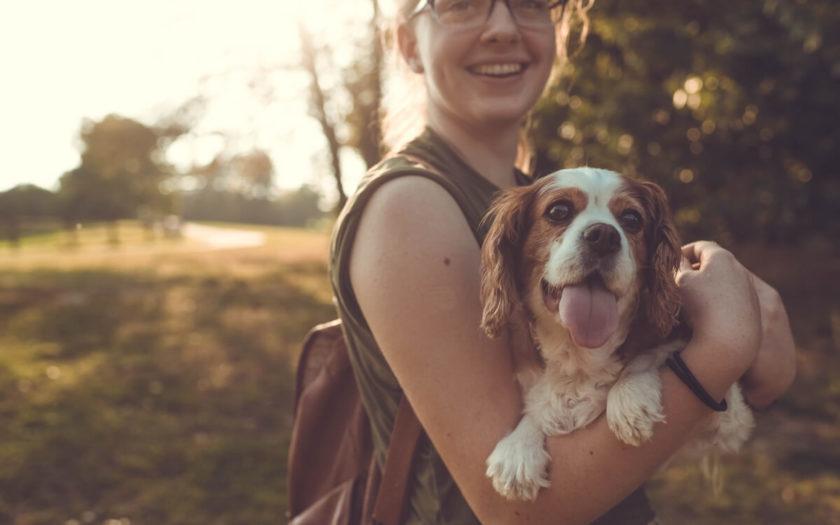 un perro como el mejor medio de contrarrestar el estrés