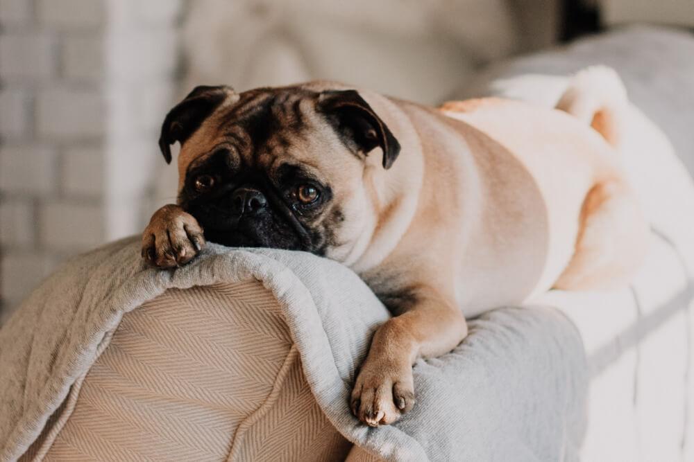 hund-energieniveau