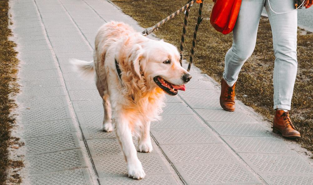 paseo de perro