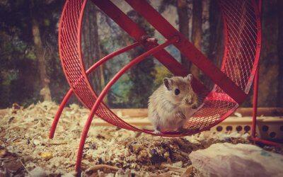 auf-ewig-gefangen-im-hamsterrad